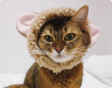 mix猫ののんちゃん