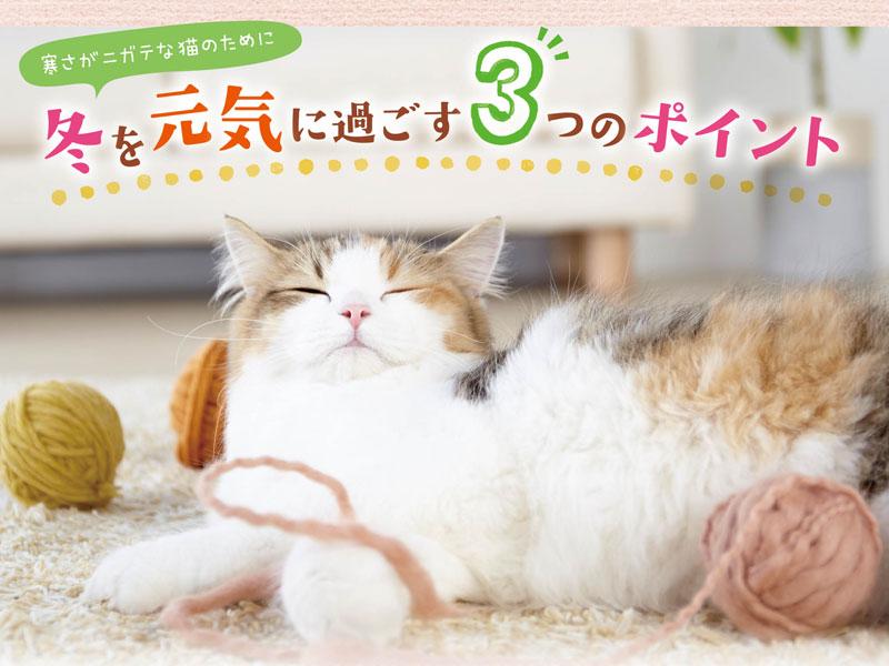 寒さが苦手な猫のために冬を元気に過ごすポイント