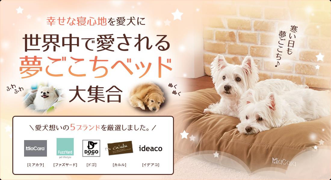 幸せな寝心地を愛犬に。世界中で愛される夢ごこちベッド大集合