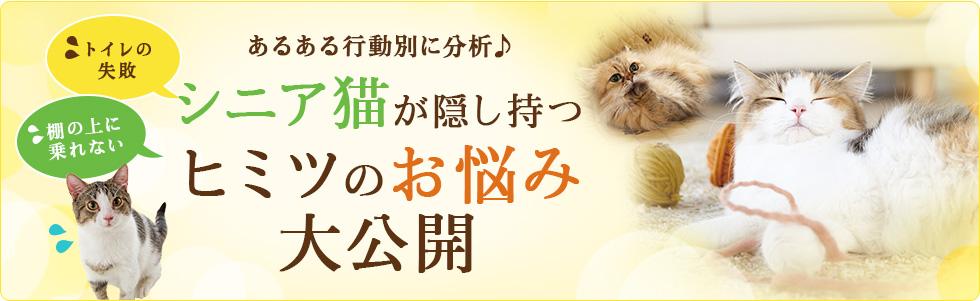 あるある行動別に分析♪シニア猫が隠し持つヒミツのお悩み 大公開