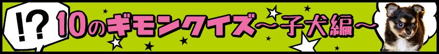 10のギモンクイズ 子犬編