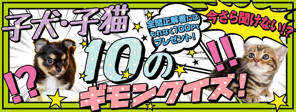 子犬子猫10のギモンクイズ!