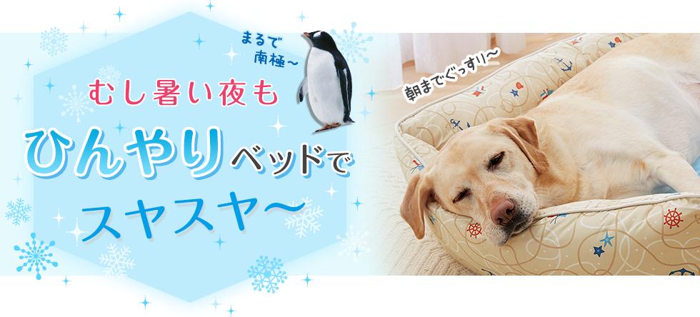 【犬ベッド特集】むし暑い夜もひんやりベッドでスヤスヤ~
