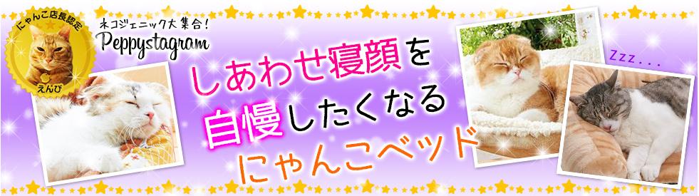 【猫ベッド特集】 ~ペピイおすすめ冬用猫ベッドで愛猫の幸せ寝顔を~