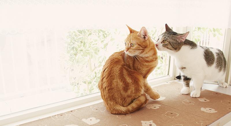 もう一度考える、愛猫を守る防災準備