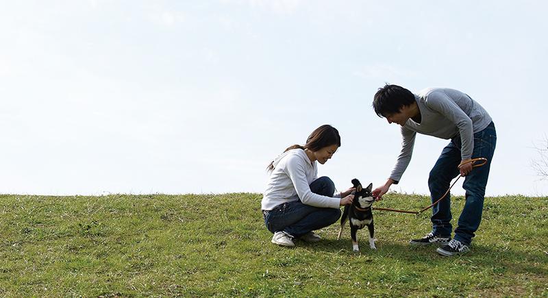 もう一度考える、愛犬を守る防災準備