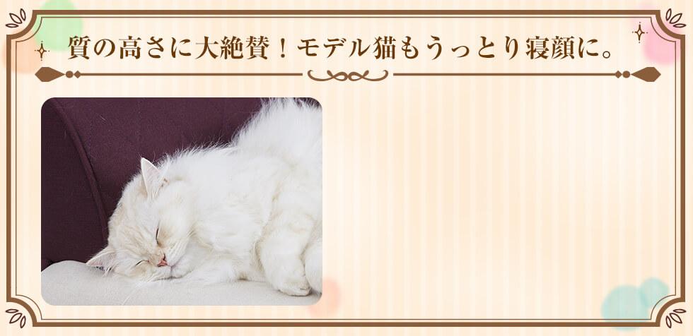 質の高さに大絶賛!モデル猫もうっとり寝顔に。