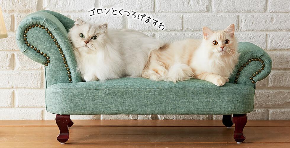 猫さま特別仕様。このリラックス感、極上です!