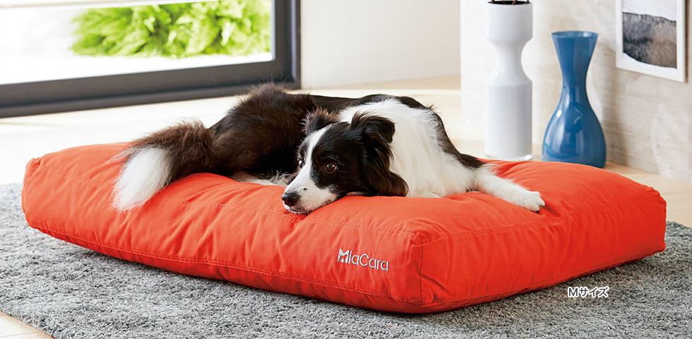 高級ドイツメーカーが追求した本物の寝心地を愛犬に。