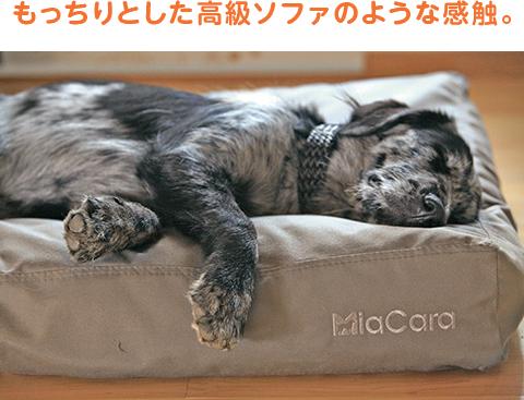 もっちりとした高級ソファのような感触。