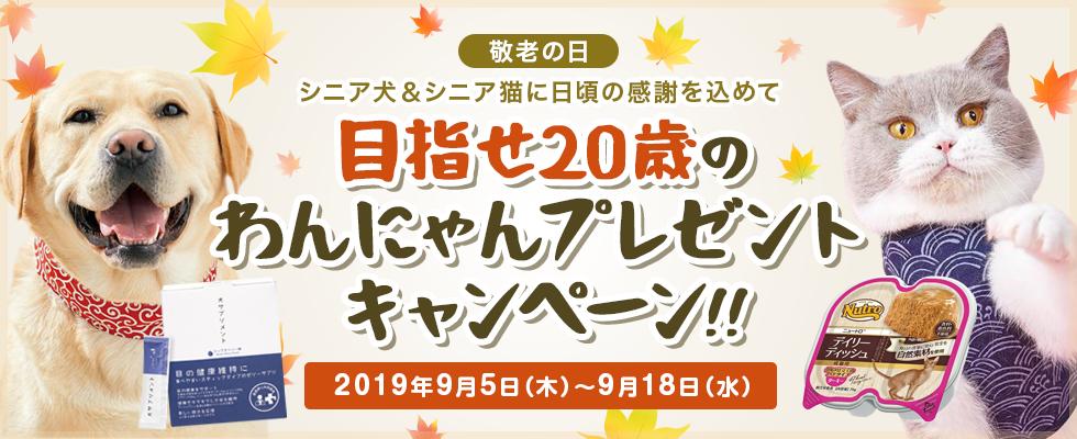 目指せ20歳のわんにゃんプレゼントキャンペーン!!