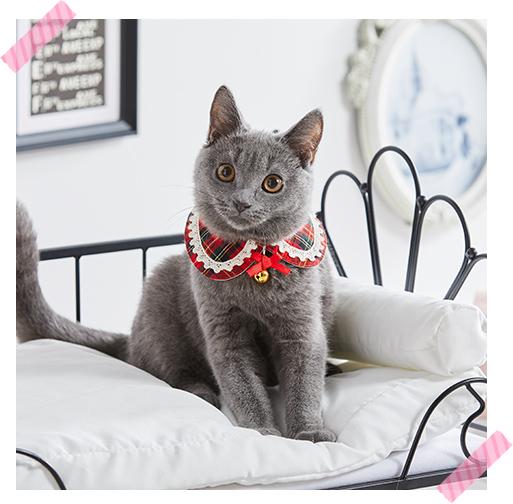 丸襟猫首輪 チェック