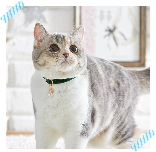 ベルベット猫首輪