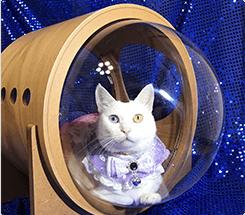 宇宙船アルファは宇宙旅行気分が味わえます。透明なドームからにゃんこの表情が見えて楽しいです。うちの子のお気に入りの場所です。坂口マリーちゃん
