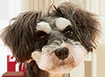 うちの子にぴったりのウェアは見つかったかな?愛犬の性格やタイプに合った、ベストな機能付きウェアを着て、毎日元気に過ごそう♪