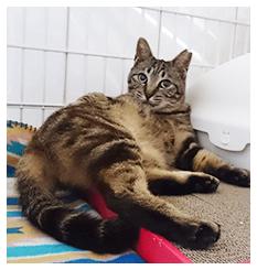 猫本来の上下運動もできるし、1段目はトイレと爪とぎ、2段目はお食事場所、3段目は落ち着ける寝床と、本当にちゃば専用のお家だなと微笑ましく見守っています♪ちゃばちゃん(MIX)