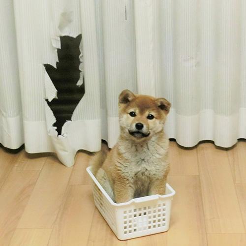 わんちゃん部門グランプリ写真