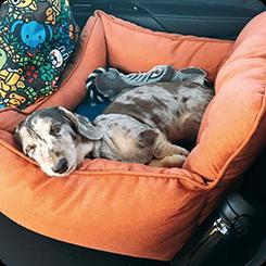 車に乗るのが大好きな子。おもちゃを入れても伸びて寝ても余裕があります。あご乗せで寝る子なのですぐに気に入ってくれました。シエルちゃん