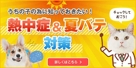 熱中症・夏バテからうちの子を守る!【愛犬・愛猫のための快適な夏の過ごし方】