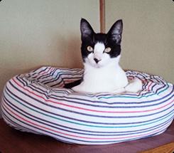 なかなか寝てくれませんでしたが、ベッドが届いて2週間諦めかけていたころ気持ち良さそうにベッドでくつろいでいました!チビちゃん