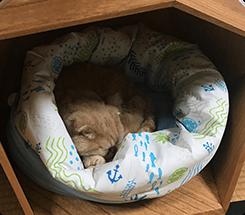 初日は見ているだけでしたが、2日目で入って眠るようになり今では爆睡です。うちのこは囲われてる方が安心するみたいで高さが調節できて良いと思います。ベロンちゃん(MIX)