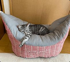 シリーズ2個目の使用です。とにかく猫の寝相にフィットし、いつも気持ち良さそうに寝ています。数あるベッドの中でも、おすすめです!すずちゃん(MIX)