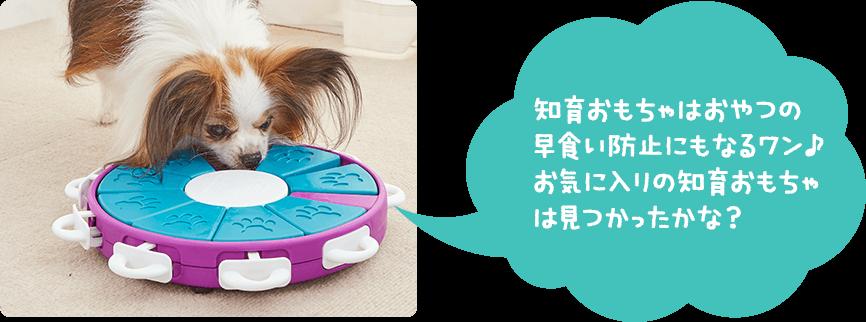 知育おもちゃはおやつの早食い防止にもなるワン♪お気に入りの知育おもちゃは見つかったかな?