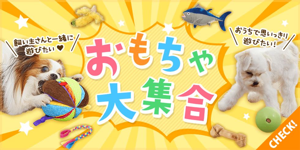 【犬おもちゃ特集】大好きなおもちゃでいっぱい遊ぼう!