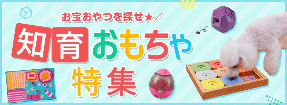 【犬用 知育おもちゃ特集】知育おもちゃを使って、おうちで脳トレ!