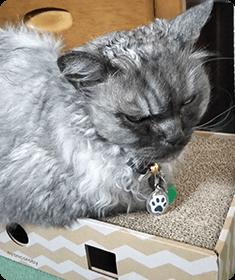 愛猫たちのおトイレ周りの日々の拭き取り、食べこぼしの拭き取り、便臭の消臭に大変優れていることを初日から実感しました。ミヌーちゃん、マリーちゃん(MIX)ニックネーム Lady godivaさん