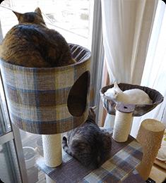 買って良かったです。愛猫三匹、楽しそうに過ごしています。部屋がブラウン系なのでブラウンチェックを選びましたが正解でした!インテリア的にも素敵です。 ミヨちゃん、はなちゃん、マリ子ちゃん ニックネーム:もーちゃんさん