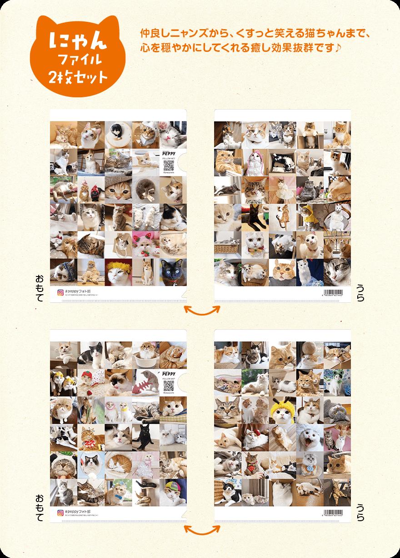 にゃんファイル2枚セット 仲良しニャンズから、くすっと笑える猫ちゃんまで、心を穏やかにしてくれる癒し効果抜群です♪