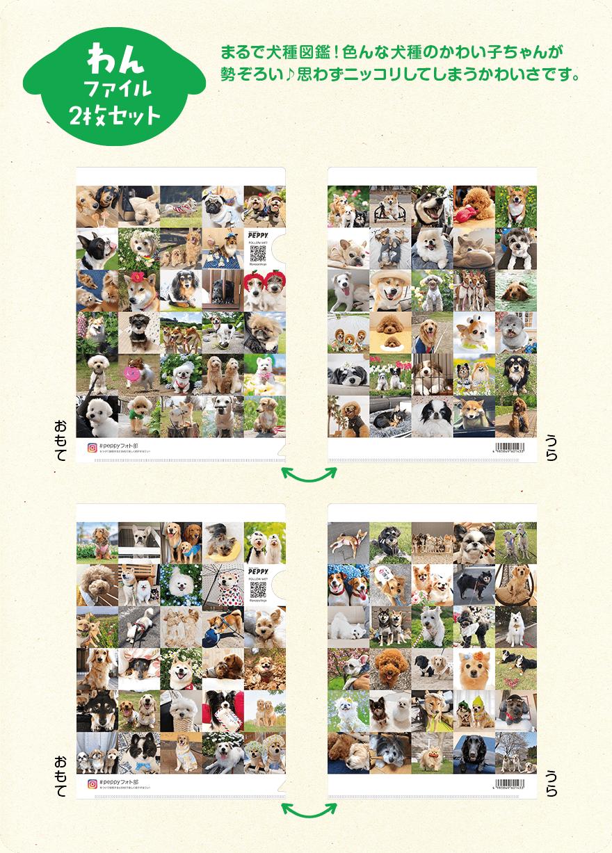 わんファイル2枚セット まるで犬種図鑑!色んな犬種のかわい子ちゃんが勢ぞろい♪思わずニッコリしてしまうかわいさです。