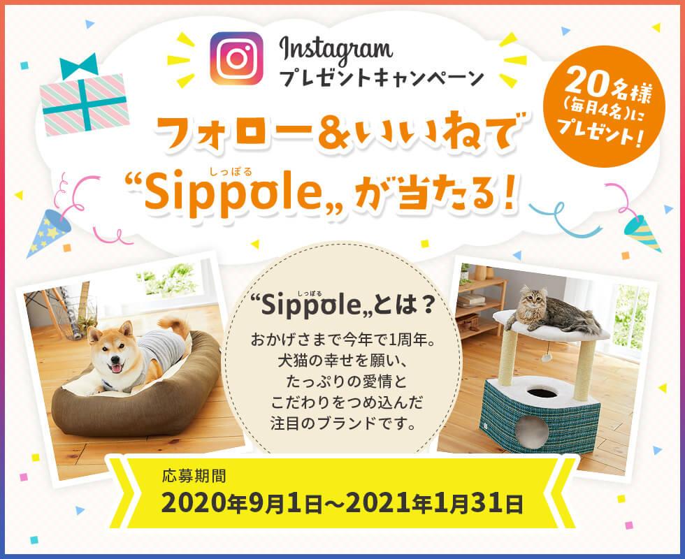 フォロー&いいねでSippoleグッズが当たるプレゼントキャンペーン