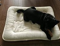 長く使えるベッドを探していました。生地がしっとりしていてオーガニック綿の優しさを感じます。静電気も起きないですし、素敵なベッドに出会えました。 mogちゃん(パグ)