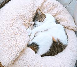 モコモコして気持ちいいのかフミフミ。寒くなるとベッドからお外を観察したり眠ったりしています。まめちゃん(MIX)