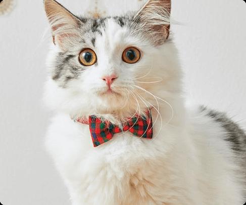 リボン猫首輪 タータンチェック