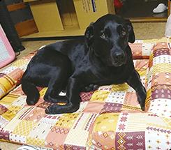 足腰の負担を減らすためこのベッドを選びました。フチのあごをのせて気持ちよさそうにうとうと…ふかふかで、リリーのお気に入りです!リリーちゃん