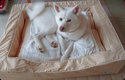 こはるちゃん(秋田犬) 置いた瞬間からお気に入りで、あごを乗せたり仰向けで寝そべったり、リラックスするときはいつもベットにいます。22キロと小柄な秋田犬ですが、ゆったり休めています。買って良かった!