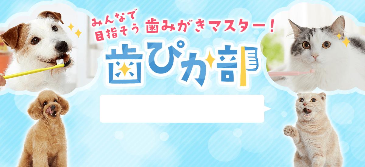 歯ぴか部2周年キャンペーン