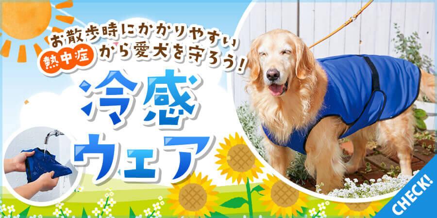 夏の暑~いお散歩に要注意!?犬用クールウェアで熱中症対策!