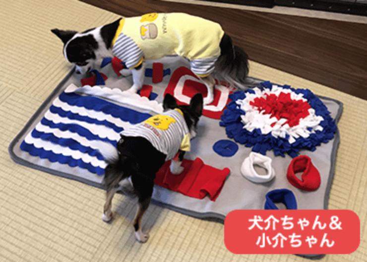 犬介ちゃん & 子介ちゃん