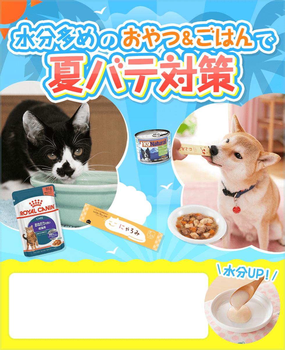 【水分UPフード特集】愛犬・愛猫の夏バテを食事で対策しよう!