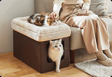 愛猫と一緒にリラックスタイム ソファに合わせやすい2階建てベッド。