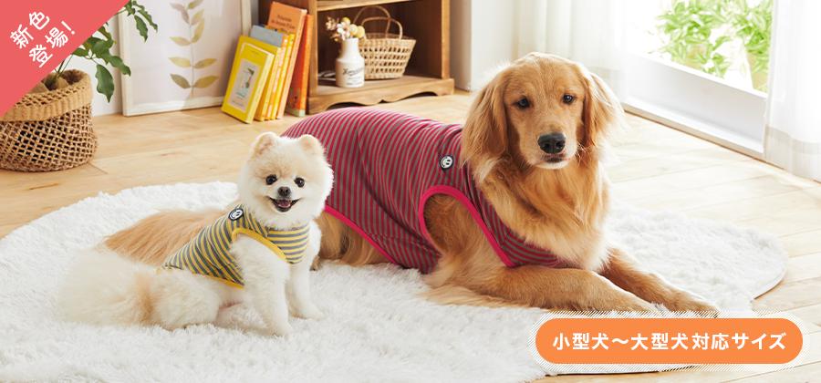 小型犬から大型犬まで豊富なサイズがうれしい♪