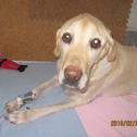 濱田さんの愛犬ヴィヴィアンちゃん