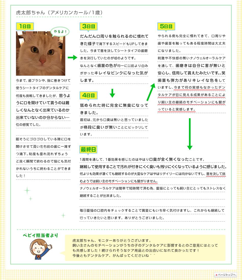 虎太郎ちゃん(アメリカンカール/1歳)