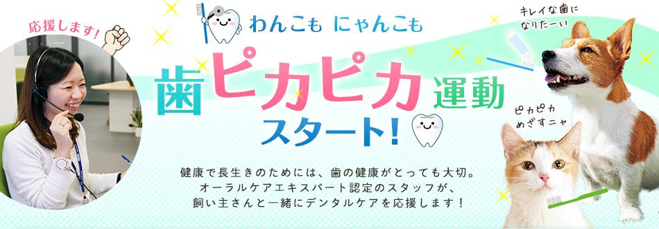 犬猫の歯の磨き方(デンタル)のご相談受付中!