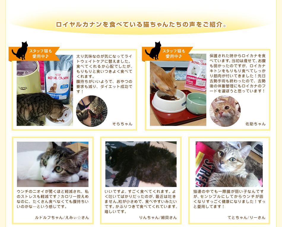 ロイヤルカナンを食べている猫ちゃんたちの声をご紹介。