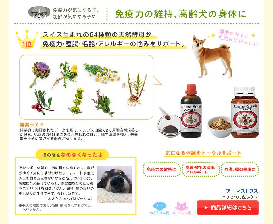 免疫力が気になる子、加齢が気になる子に 免疫力の維持、高齢犬の身体に